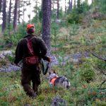 Det blev en tråkig start på älgjakten för det småländska jaktlaget. Arkivfoto: Olle Olsson
