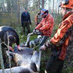 Dagen innan älgjakten har jägarna i Nordmark möjlighet att gå på älgjaktsgudstjänst. Arkivfoto: Lars-Henrik Andersson