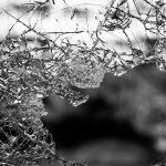Storstadsborna får väl lära sig leva med gatuvåld och skadegörelse på samma sätt som landsbygdsbor ska lära sig leva med varg, skriver debattören.