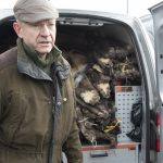 Skinnhandlare Anders Tengbom spår högre priser på mårdskinnen på vårens skinnauktioner. Foto: Jan Henricson