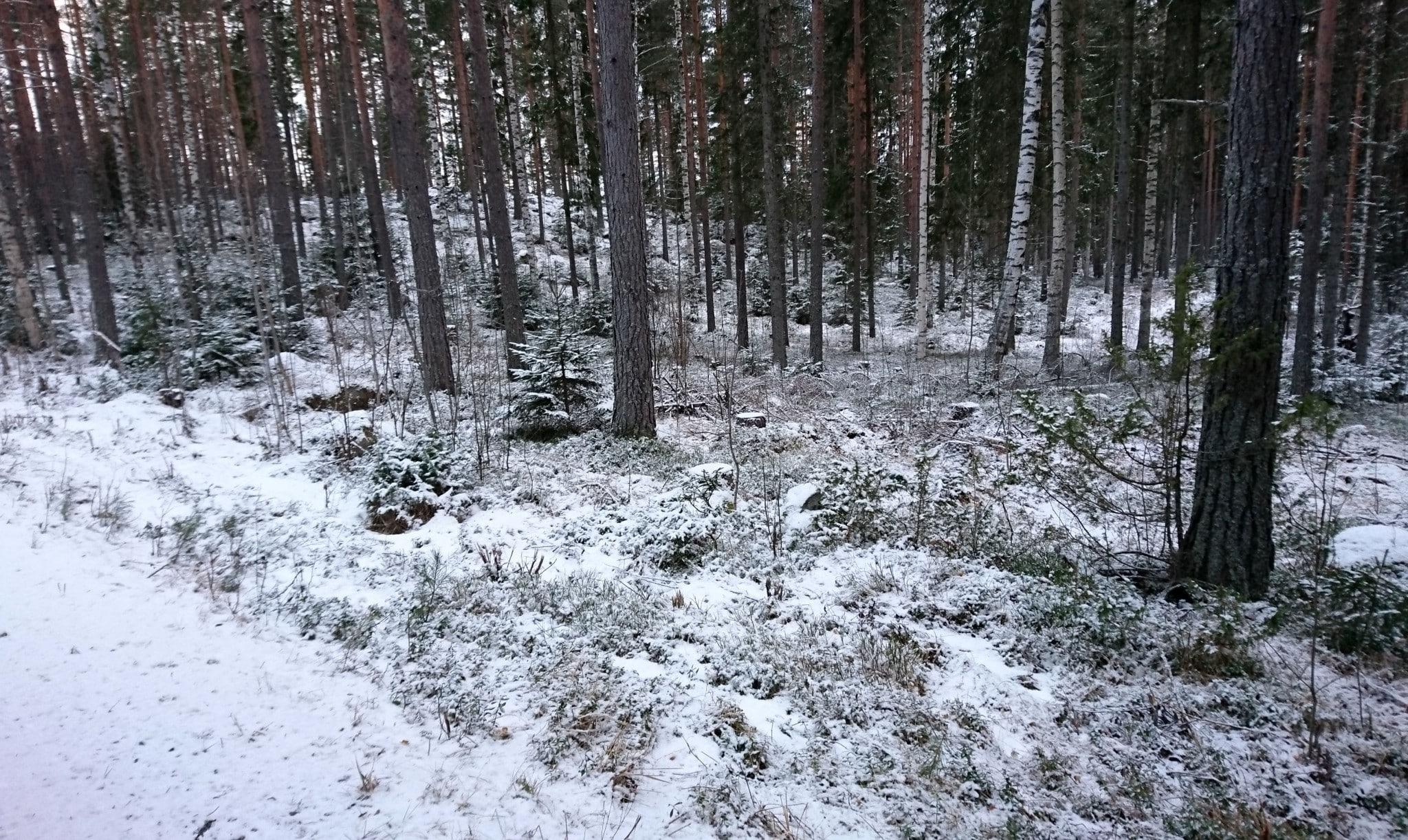Det ligger ytterst lite snö inom Blybergsreviret i Hälsingland och vargspår har hittats. Redan i morgon tisdag väntas mer snö i området.