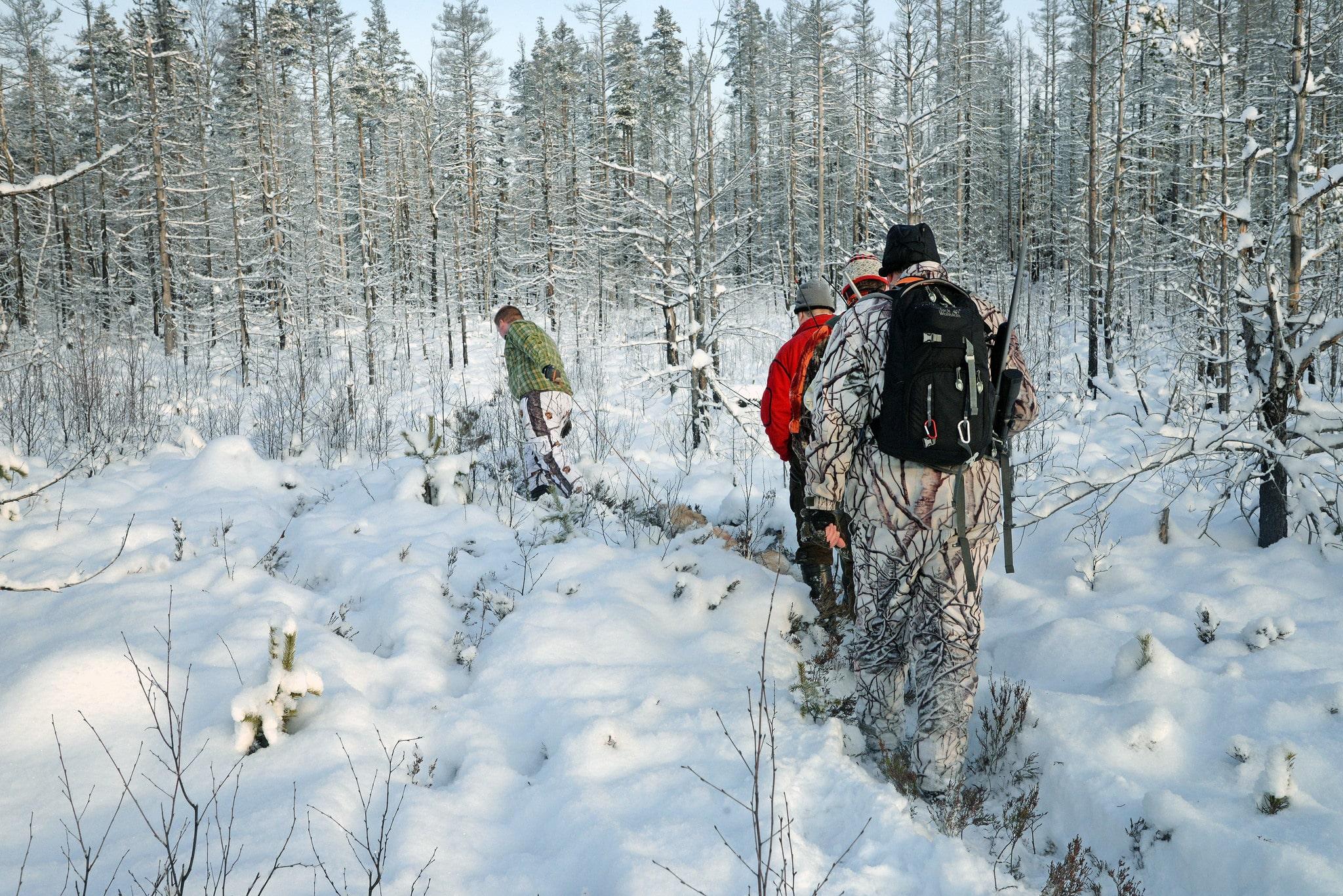 Här kan du följa Svensk Jakts löpande rapportering från vargjakten. Foto: Lars-Henrik Andersson