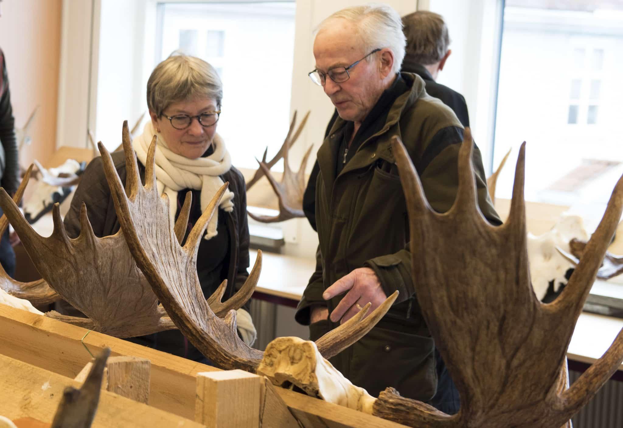 040fd7f3afc De många fina älghornen tilldrog sig stort intresse. Här diskuterar Gunilla  Malmsten och Lars Larsson en mycket fin Skånetjur. Foto: Jan Henricson