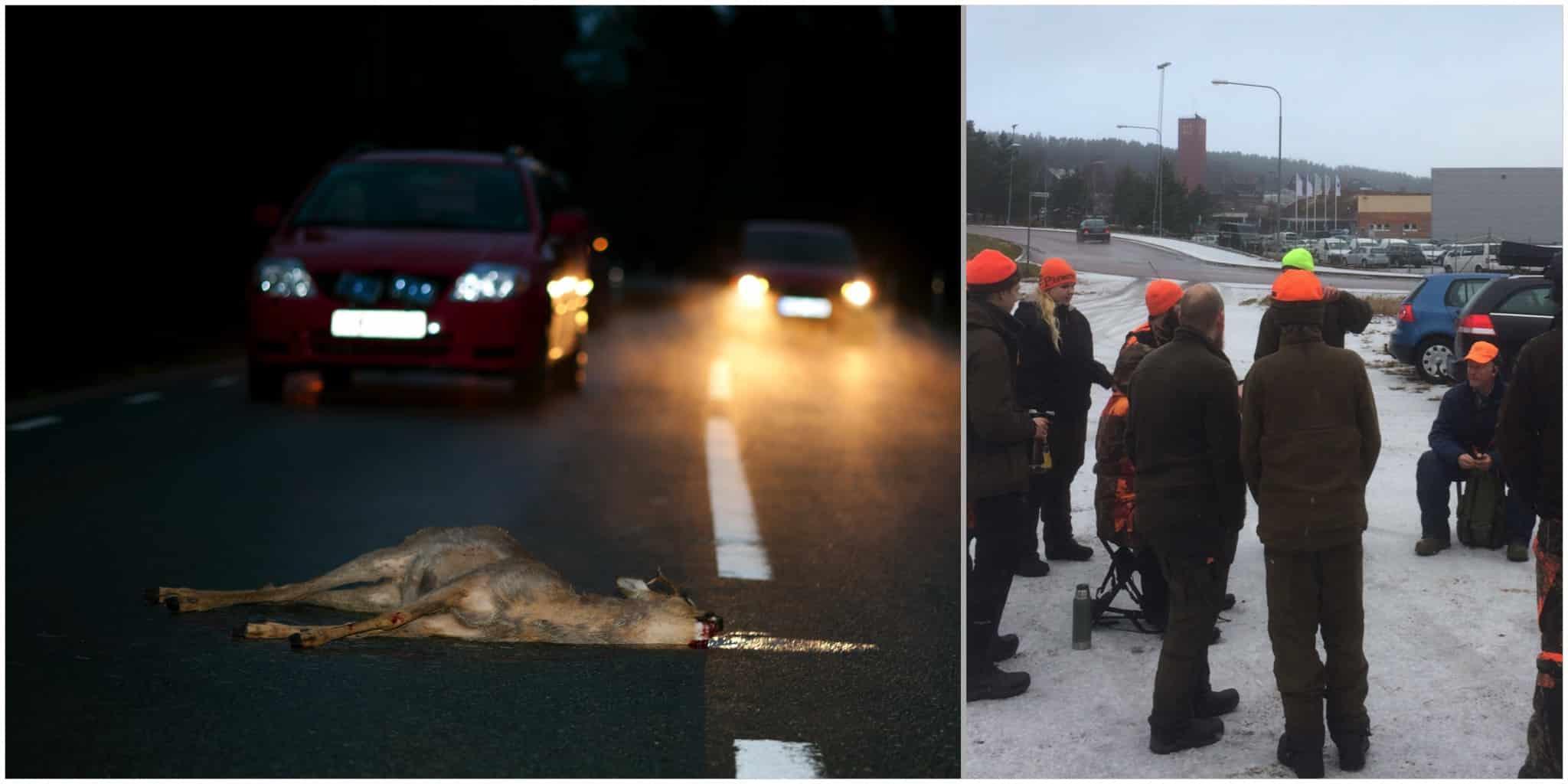 Råd för att undvika delaktig utfodring och tätortsnära jakt ska minska antalet rådjursolyckor i Falun. Foto: Kenneth Johansson samt Jerk Sjöberg