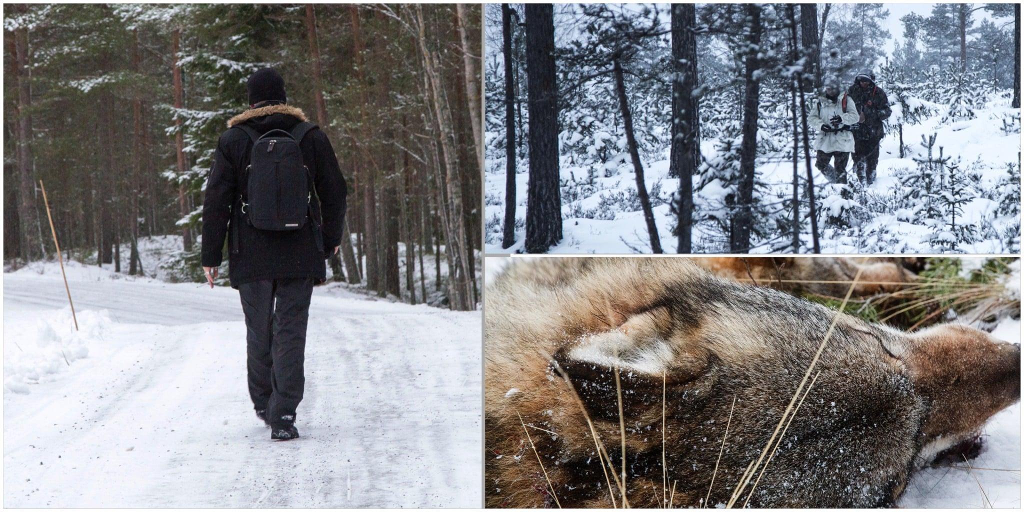 """I Jägareförbundets skrift """"Att hantera jaktsabotage"""" finns fler råd till jägaren på hur han eller hon ska agera vid möten med människor som vill störa jakten. Foto: Olle Olsson"""