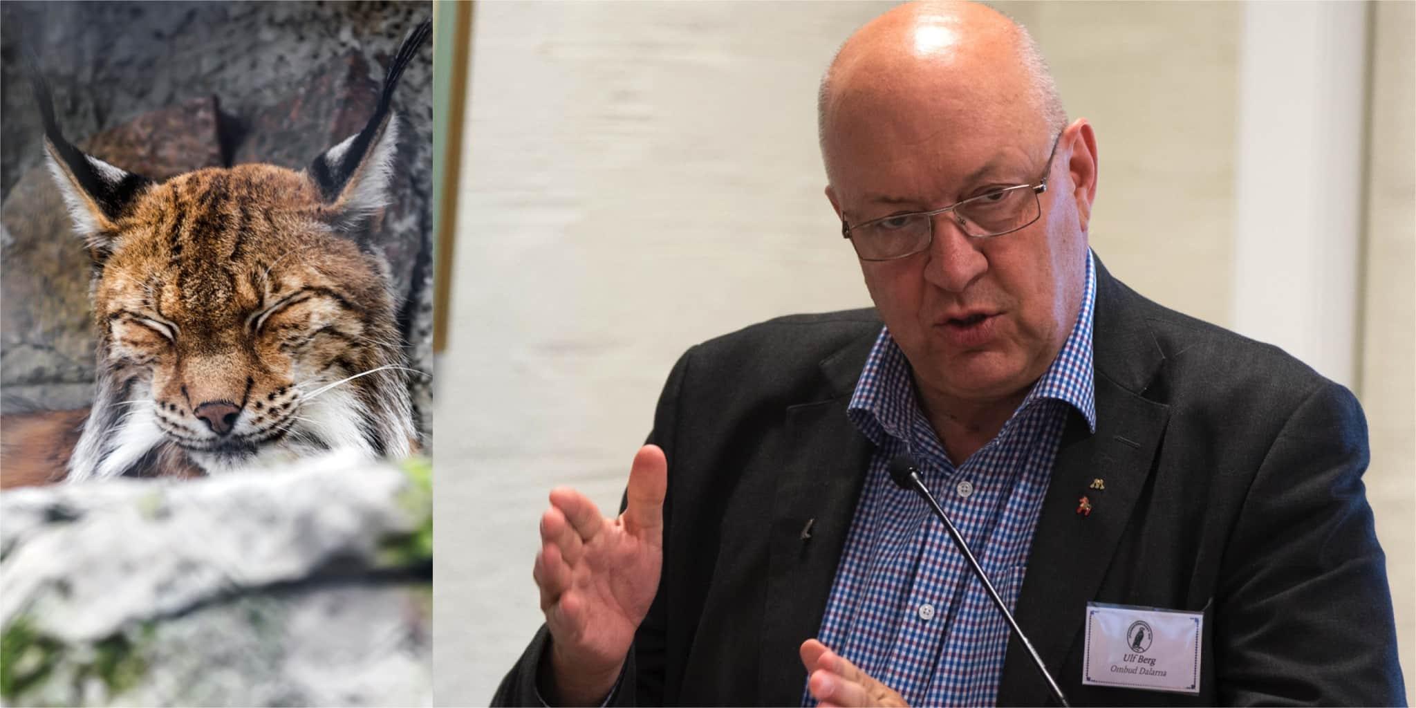 Ulf Berg efterlyser tydligare direktiv i de regleringsbrev som går ut till landets myndigheter. Foto: Mostphotos (lodjur) samt Lars Nilsson (Ulf Berg)