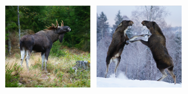 Två av Kristoffer Sahléns bilders som använts som omslagsfoton under 2017. Foto: Kristoffer Sahlén.