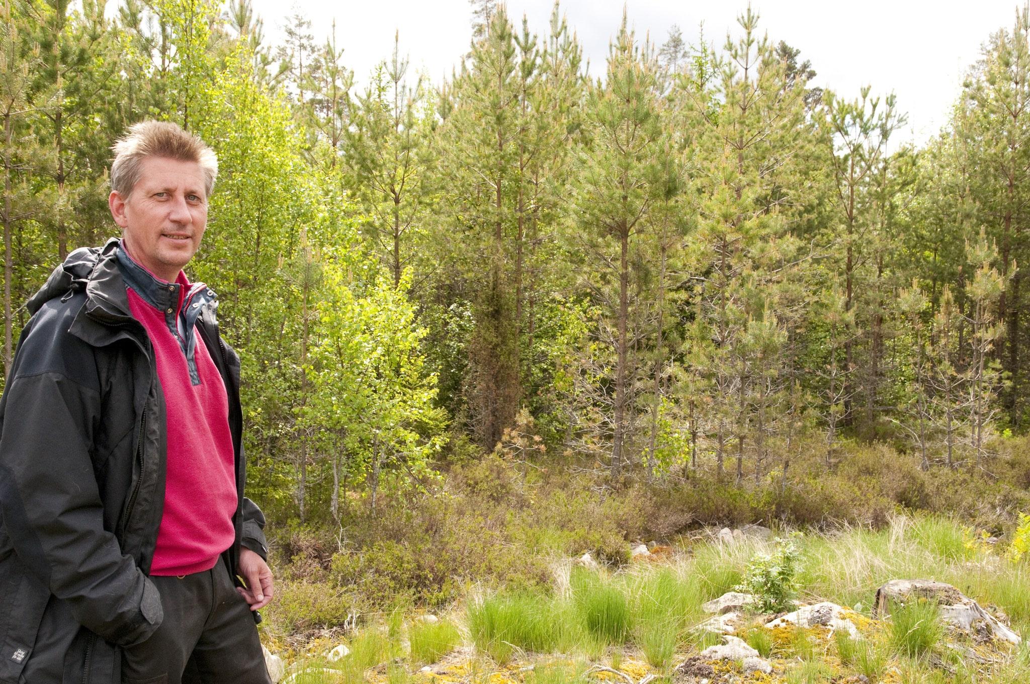 Ove Arnesson har för Skogsstyrelsens räkning lett projektet Mera tall. Erfarenheter och lyckade resultat från projektet ska nu spridas över landet. Foto: Jan Henricson