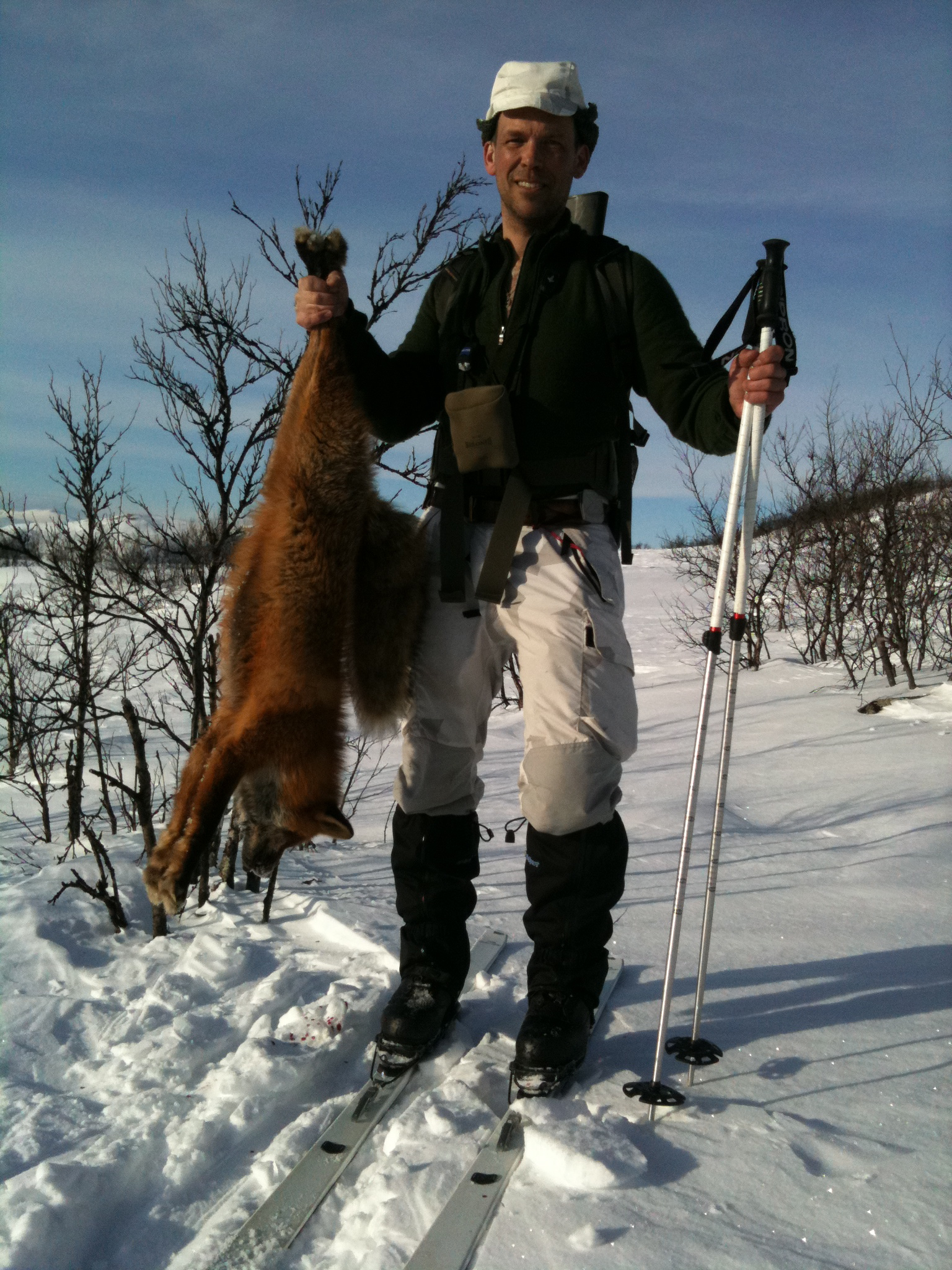 Bli inte förvånad om fjällets rävar är aktiva dagtid. Även en räv i lega brukar genast springa upp om den hör ett lockläte.
