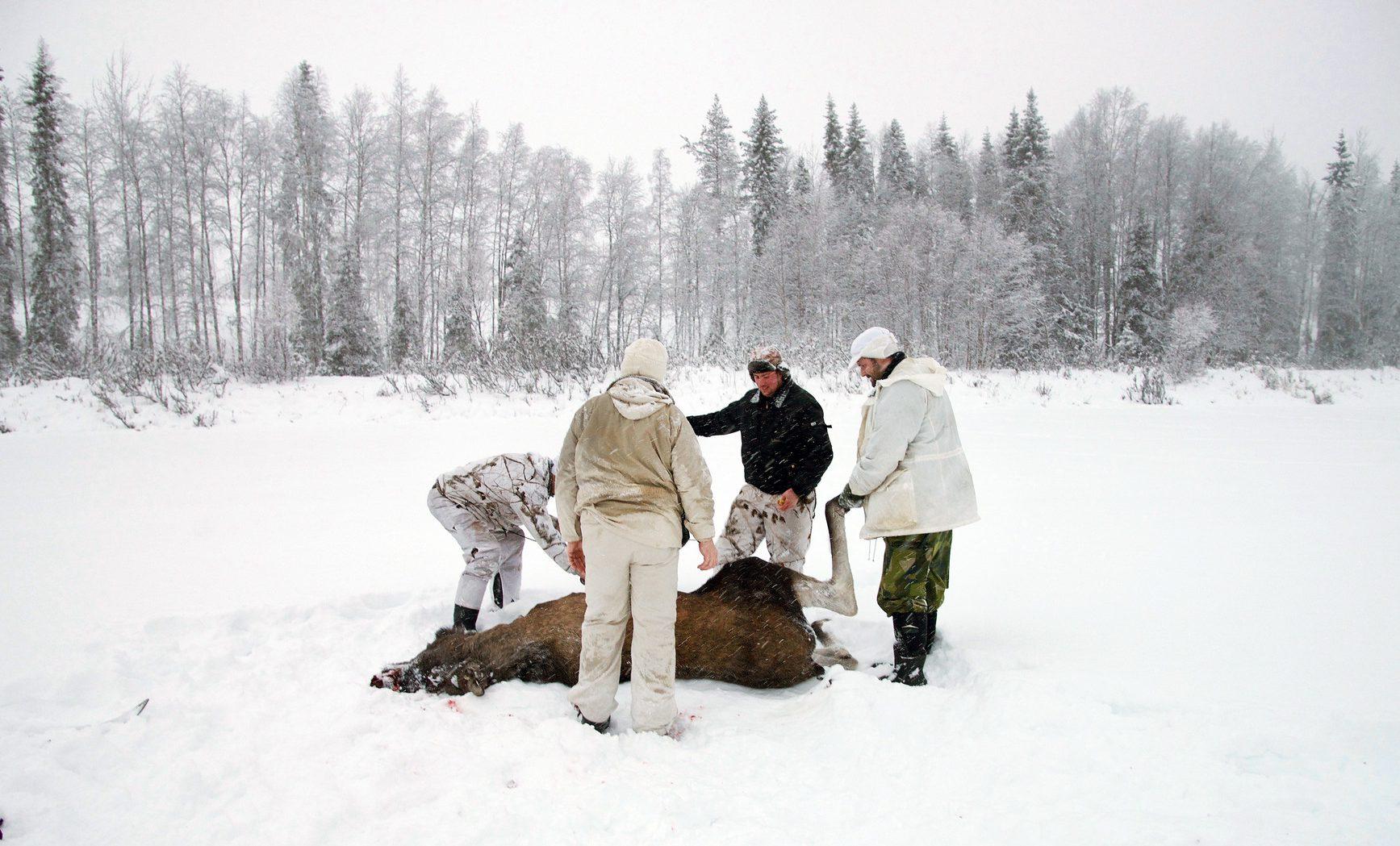 Älgjakt vintertid skapar debatt bland jägarna vad gäller etiken. Foto: Lars-Henrik Andersson