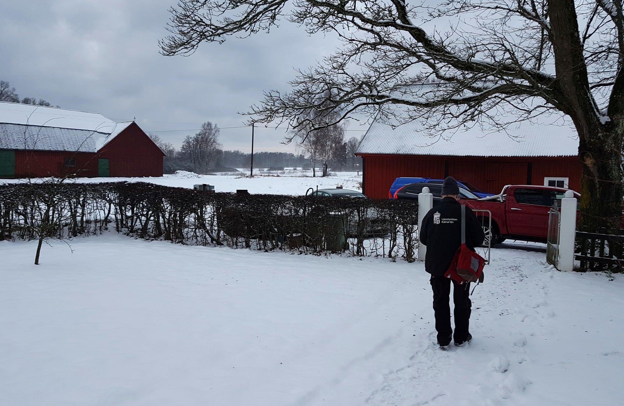 Vargen passerade över en gårdplan i Brömsebro på väg ner mot Torhamns udde. Foto: Privat