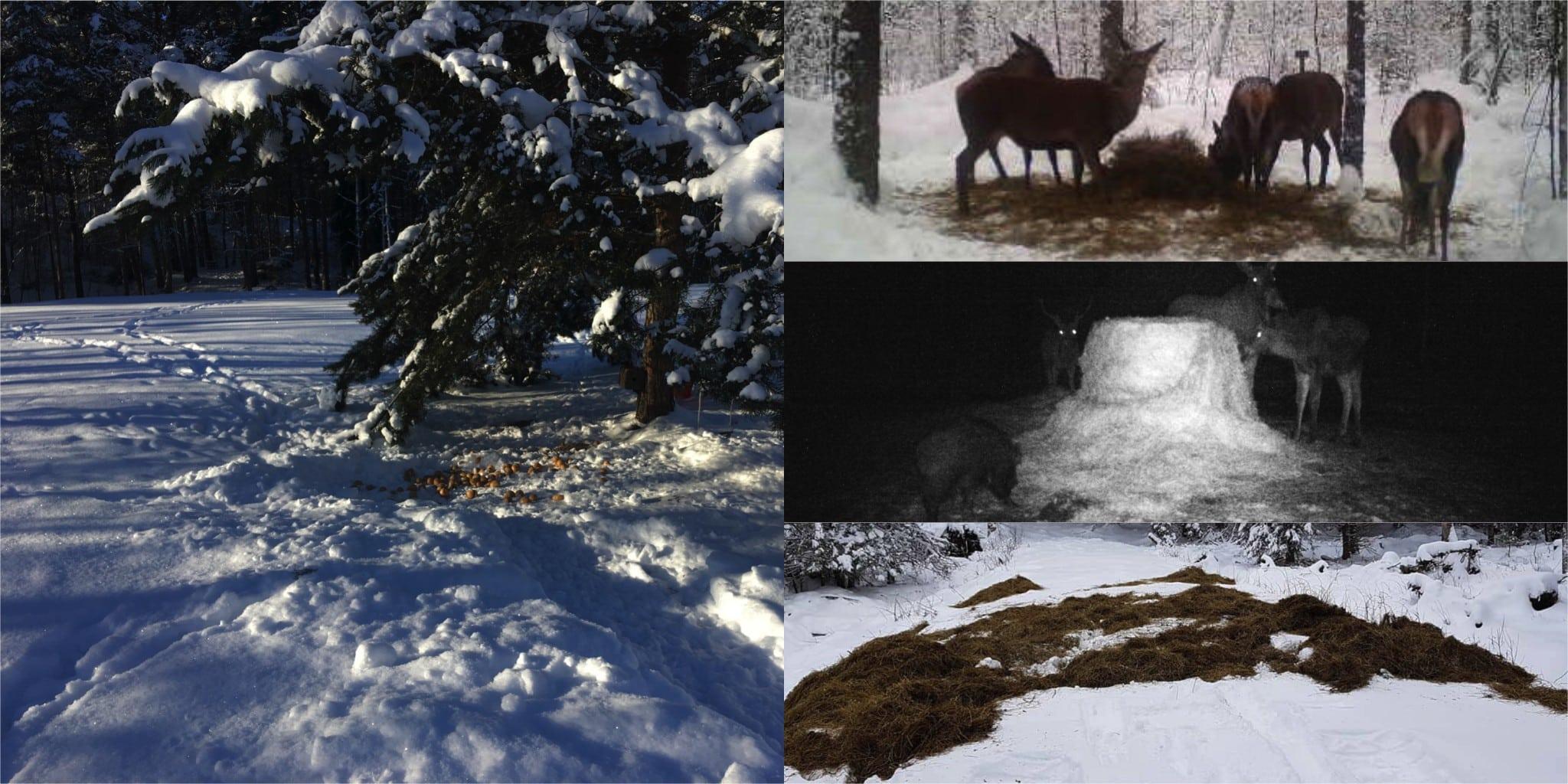 Jägarnas årliga viltvårdsinsatser uppgår till miljonbelopp. Foto: Privat