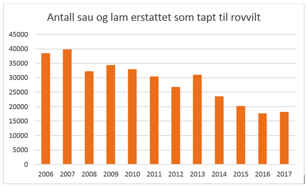 Antal rovdjursdödade får och lamm som myndigheterna i Norge lämnat ersättning för år 2006-2017. Källa: Miljødirektoratet