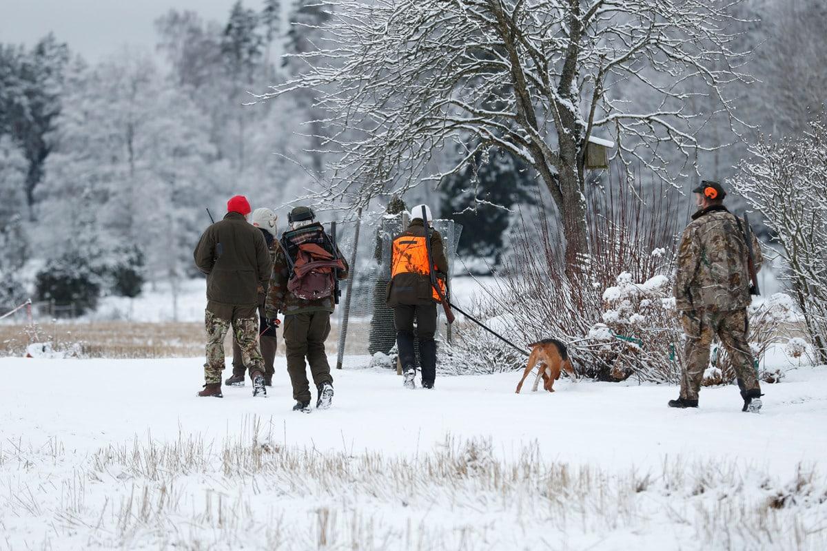 Hundföraren Anna Green tar med sig en grupp jägare till där hon ska släppa sin stövare. Foto: Boo Gunnarsson