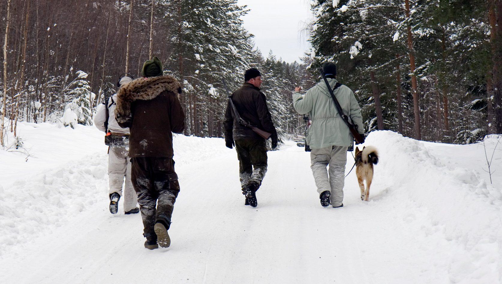 Förvaltningsrätten i Luleå avslår överklaganden av licensjakten i fyra län. Foto: unknown