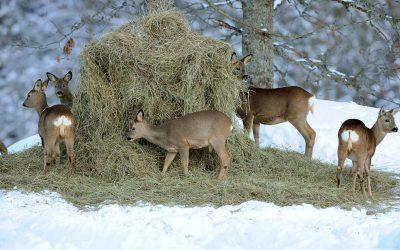 Vi jägare behöver visa på allt positivt vi gör för vilt- och naturvård och vi kan gärna ta i så vi nästan spricker, anser skribenten.