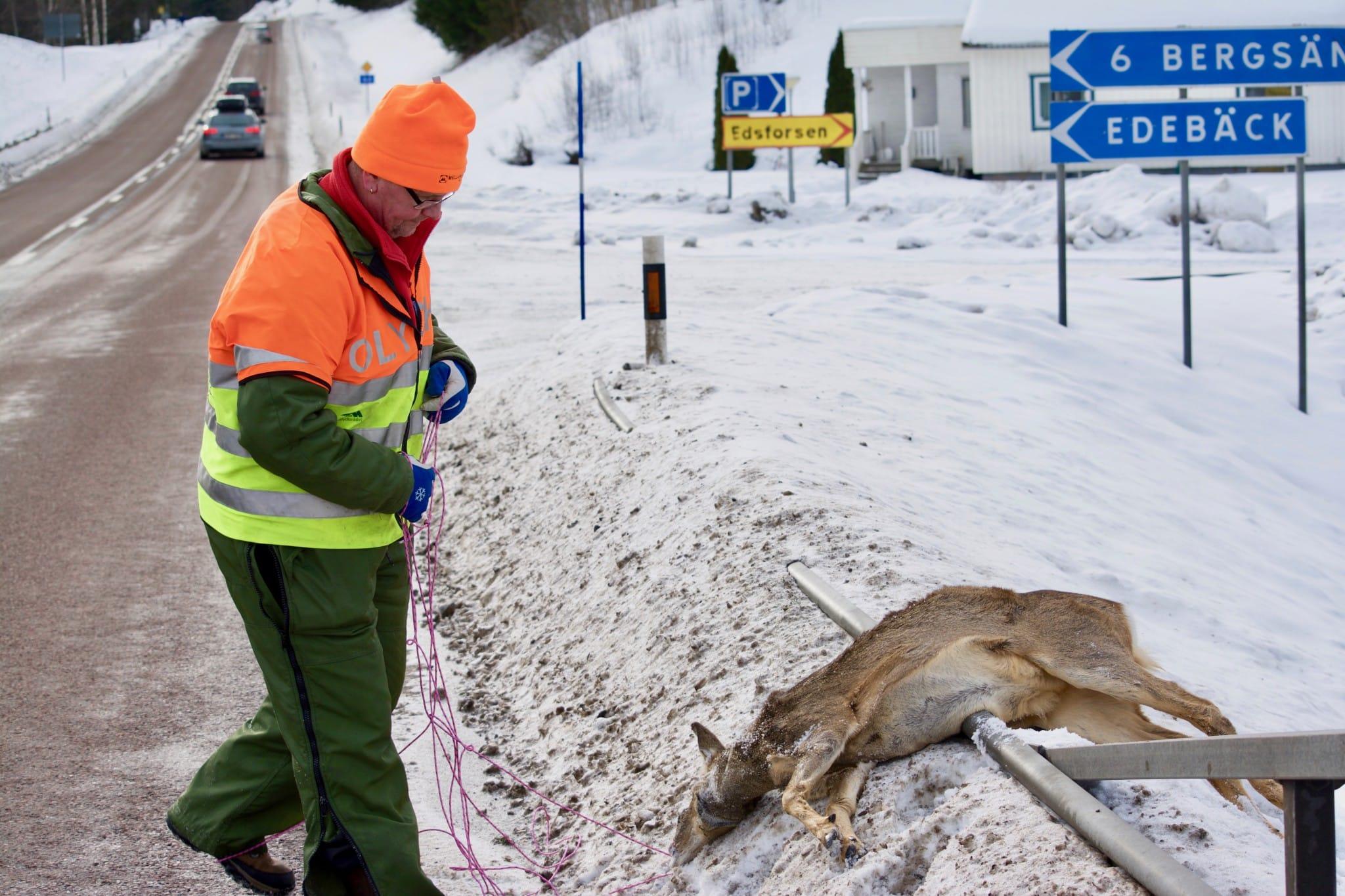 Polisen ändrar sig. Rådjuren som hoppade från bron i Edebäck var en viltolycka i trafik, och det innebär att ersättning och försäkring gäller för NVR:s eftersöksjägare Anders Holmkvist. Foto: Jonas Eriksson