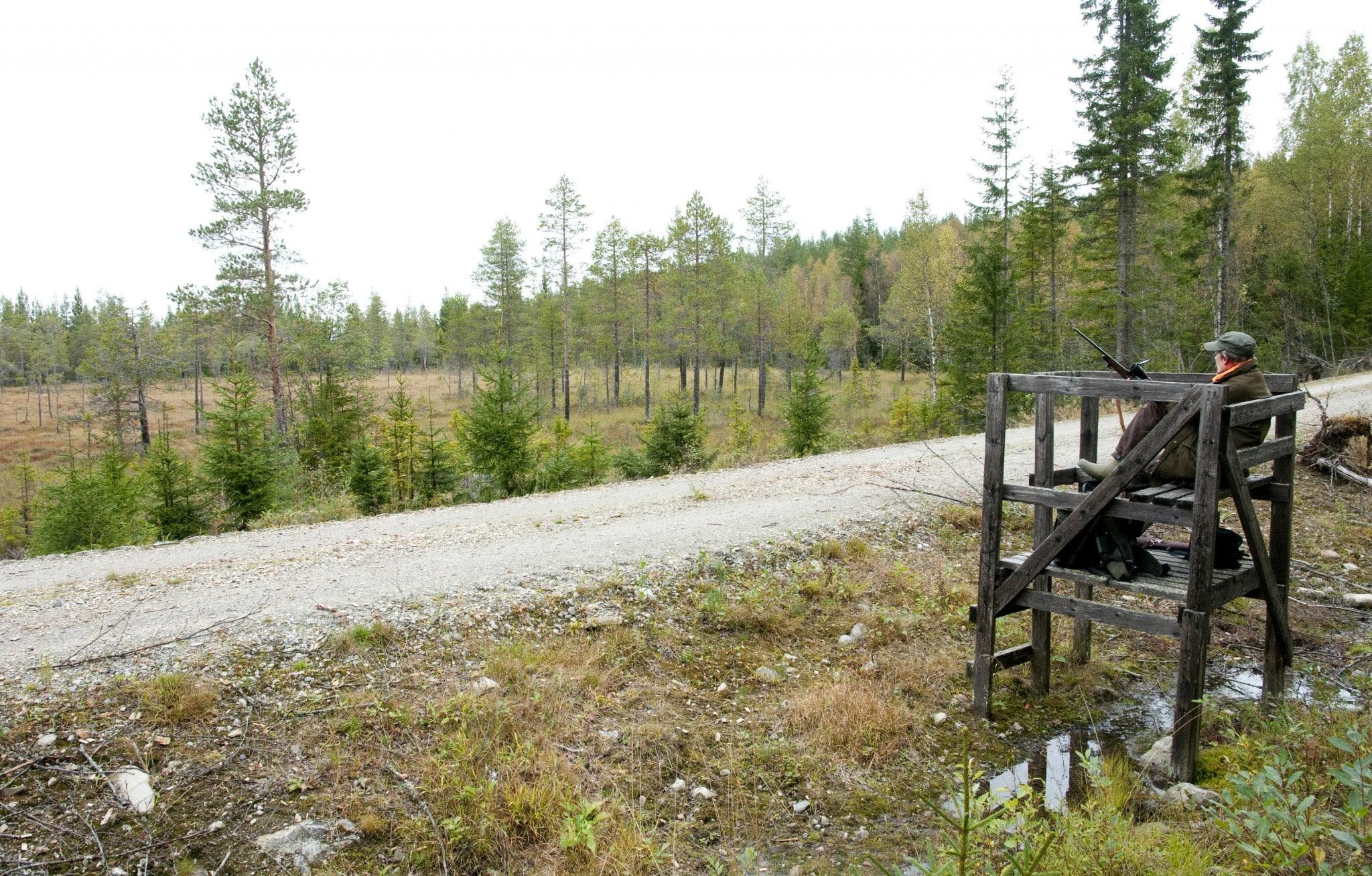 Att sitta på ett älgpass är inte jakt, anser debattören som förordar jakten med löshund. Foto: Jan Henricson