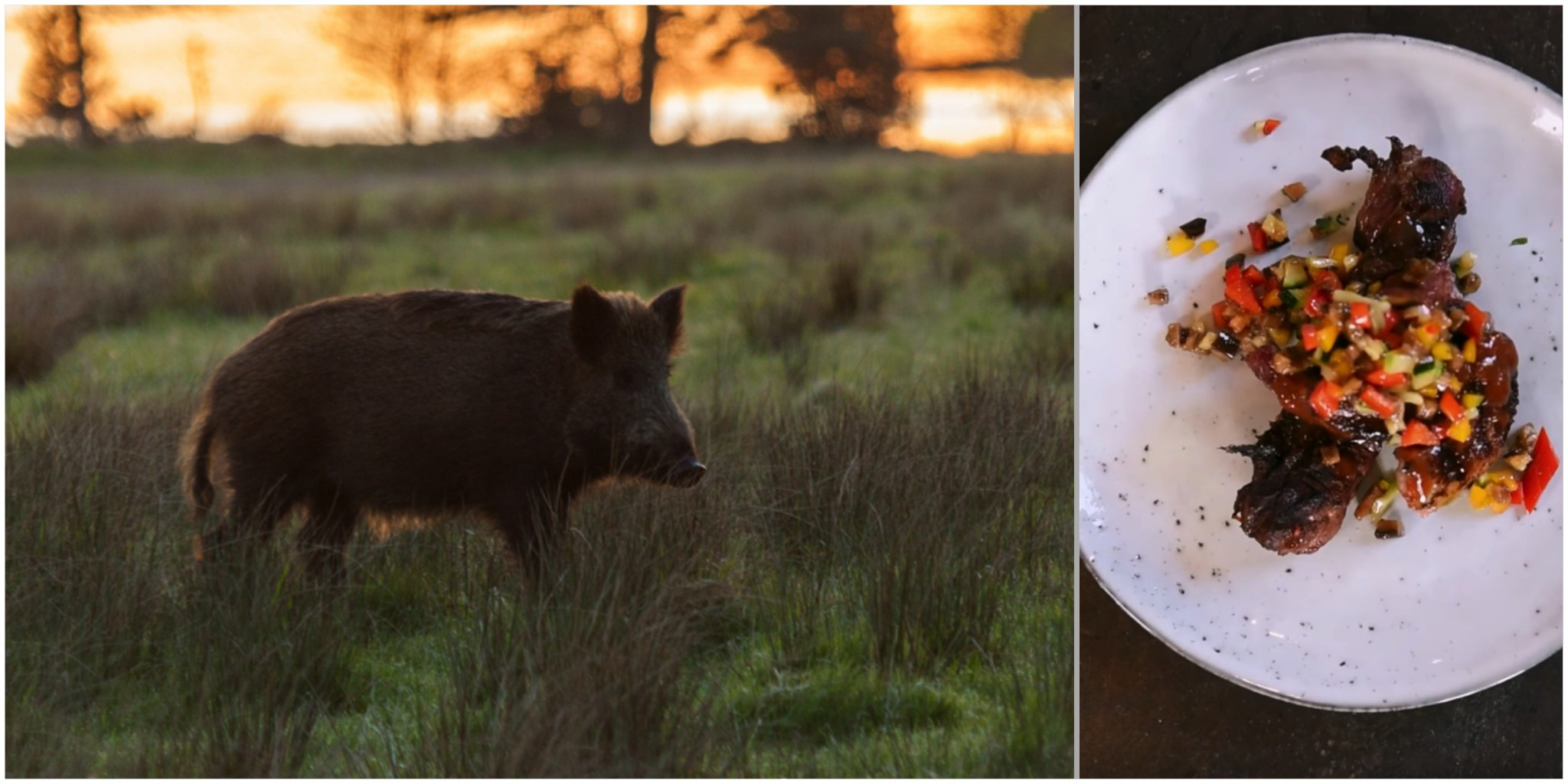 Jägareförbundets har sevärda kortfilmer om tillvaratagande av vildsvin. Foto: Mostphotos