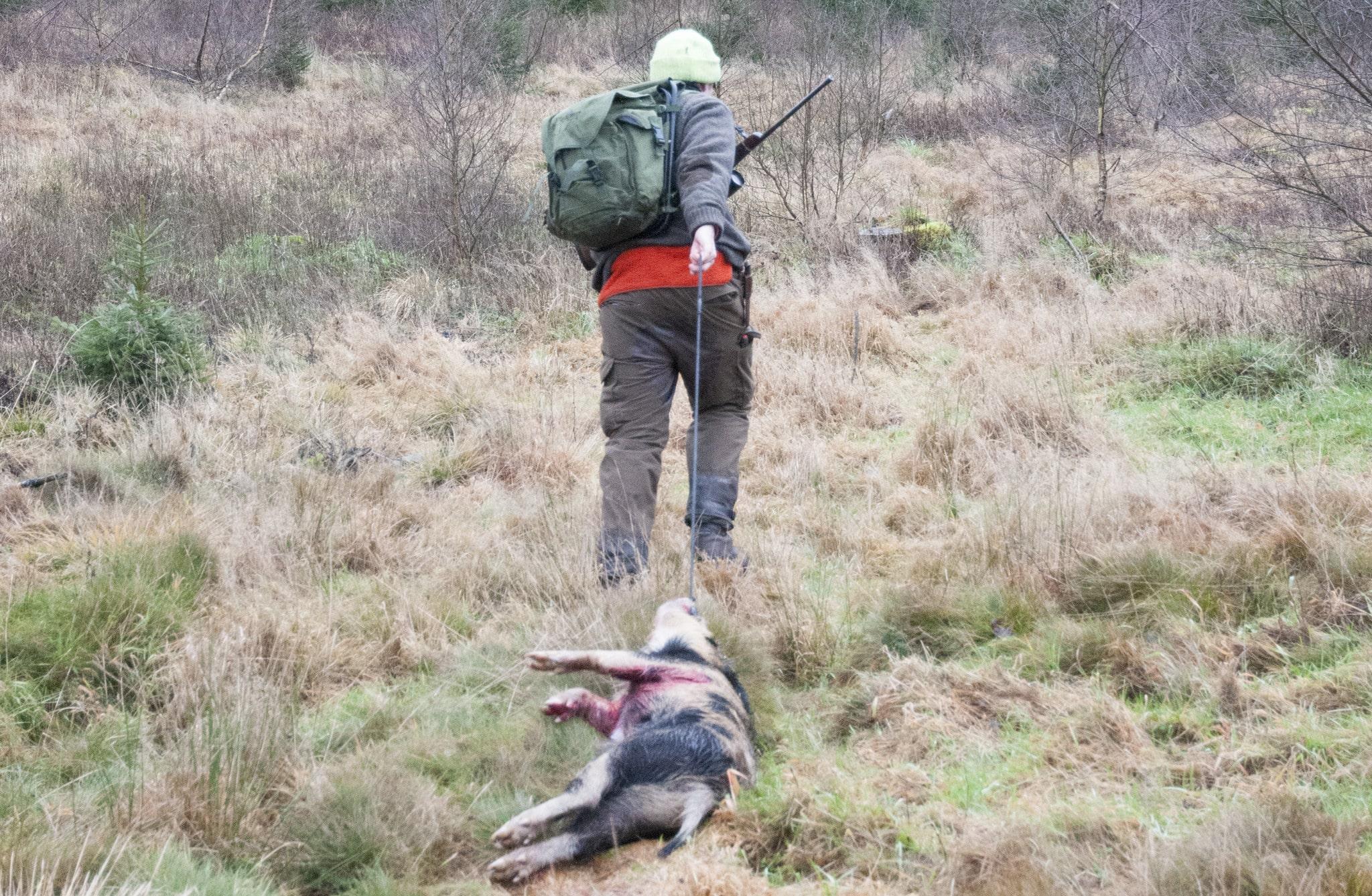 Debattören skulle gärna hjälpa till för att mildra vildsvinsproblemen, men anser att de som har jakten tar alldeles för mycket betalt av en gästjägare.