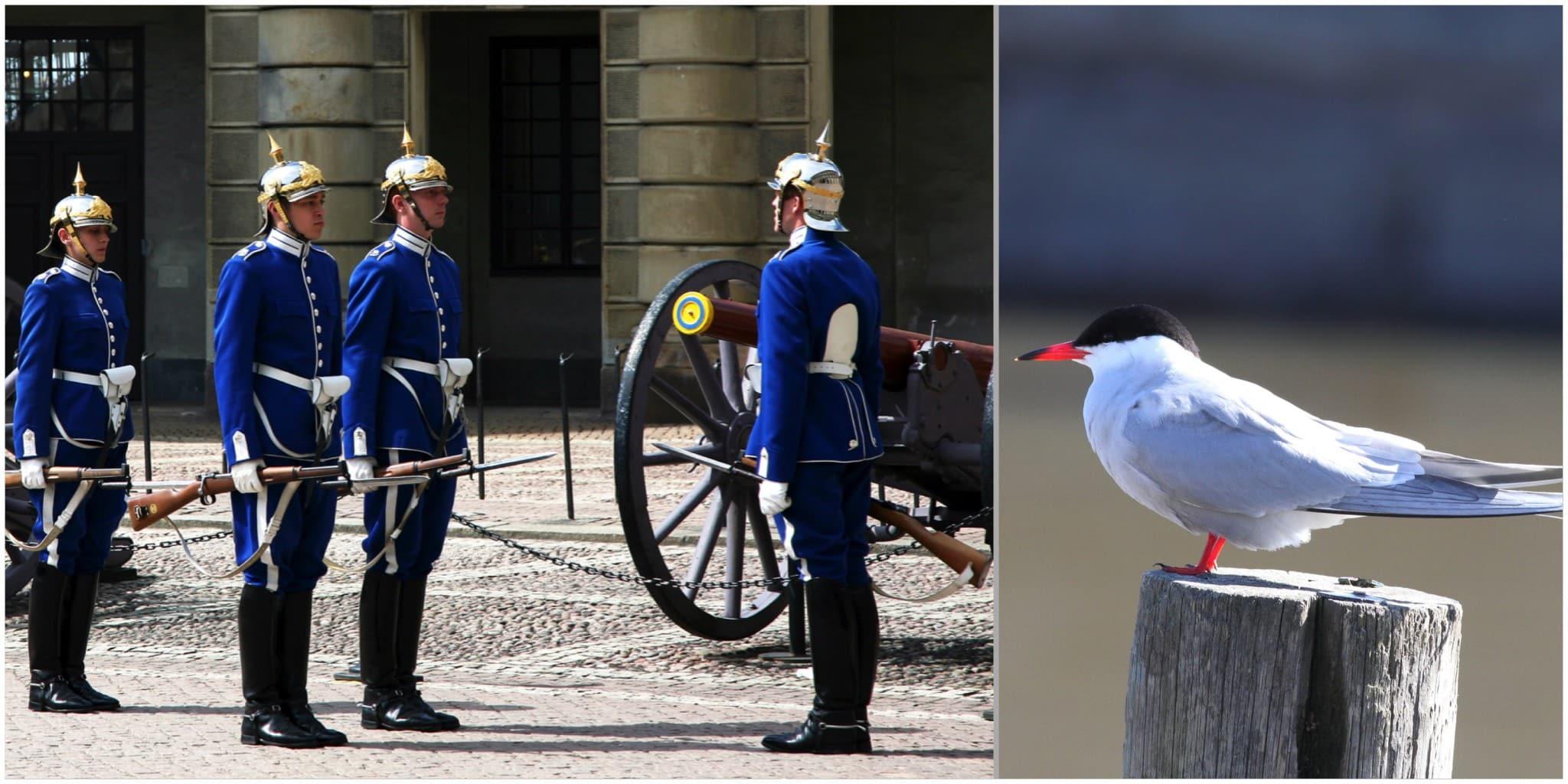 Foto: Mostphotos samt Niklas Liljebäck (fisktärna)