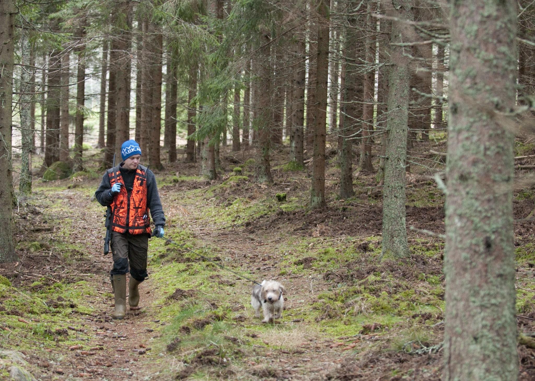 Lägg ett doftspår, en slinga som den försvunna hunden kan följa, där den har observerats eller där du tror att den kan befinna sig. Ta gärna med en hundkompis. Foto: Jan Henricson