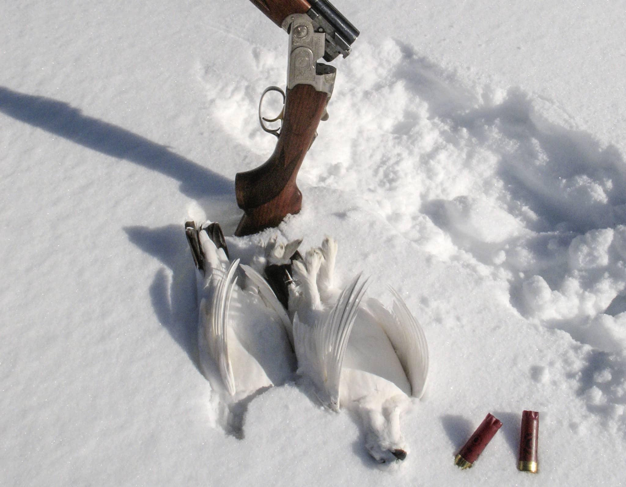 Det är inte självklart att din favoritpatron från hösten även fungerar bra under vinterjakt. Kalla temperaturer kan ge sänkt utgångshastighet, så provskjut före jakten.