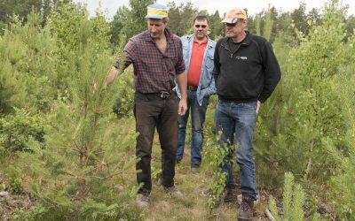 Fredrik Pettersson diskuterar undermåliga tallplantor med Anders Arrenius och Thomas Karlsson. I planteringen ser i stort sett varenda tall ut som på bilden, eller värre. Och det beror inte på viltbete.