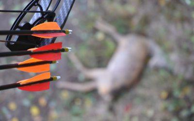 Naturvårdsverket föreslår att bågjakt ska tillåtas i Sverige.
