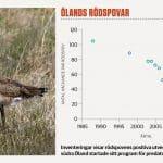 Magnus Johansson gläder sig åt rödspovens framgångar, som Ölandsjägarna har en stor del igenom sin ihärdiga jakt på predatorer.