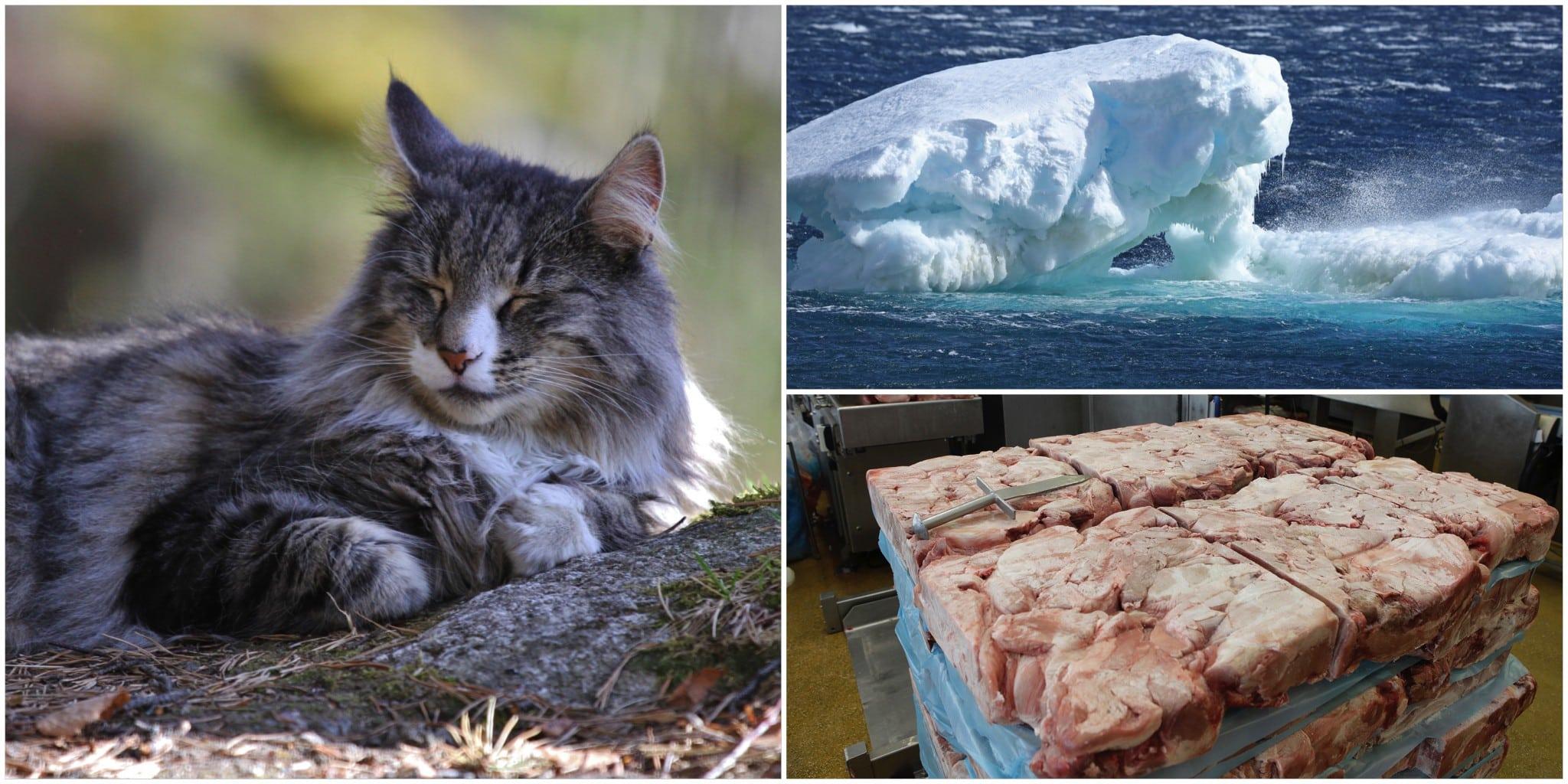 Ingen kan med förnuftet i behåll säga att syftet med att ha katt överväger den klimatbelastning missen faktiskt innebär, anser insändarskribenten.