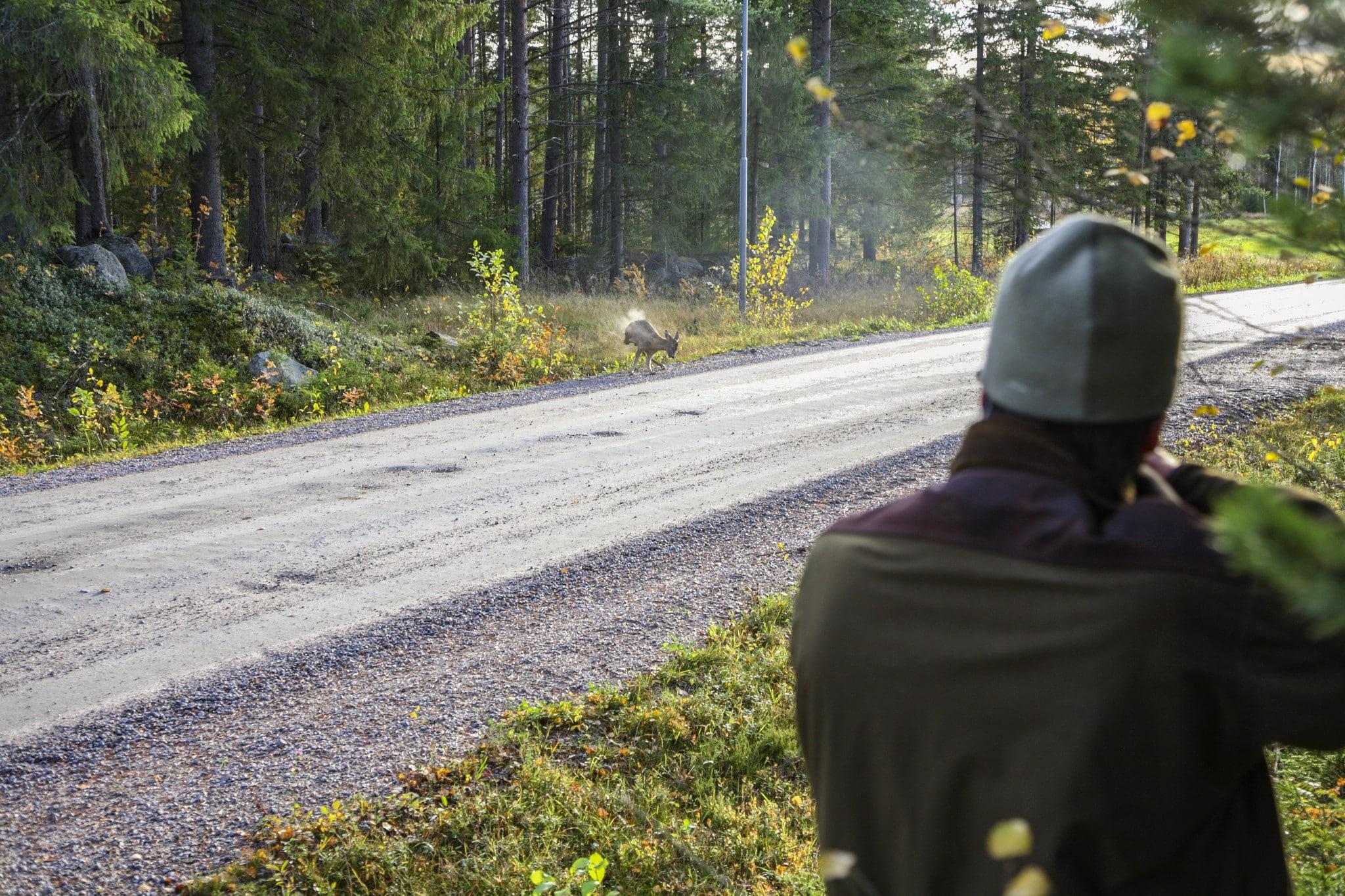 Det är inte nödvändigt att skjuta tunga laddningar bara för att man jagar rådjur. På rimliga skotthåll är hagelskottet effektivt ändå.