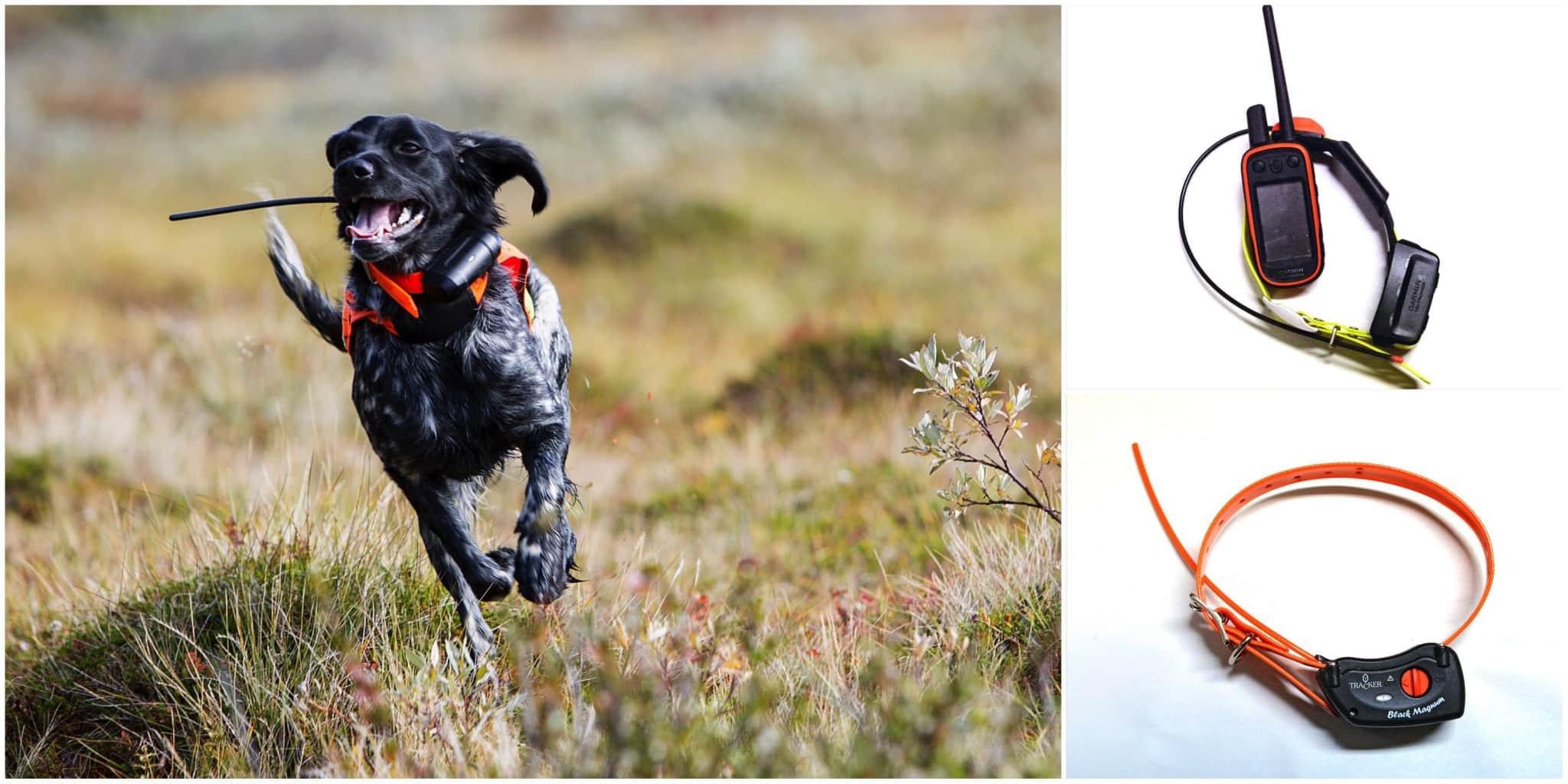Svensk Jakt går igenom för- och nackdelar med de båda hundpejlsystemen. Foto: Olle Olsson & Lars-Henrik Andersson