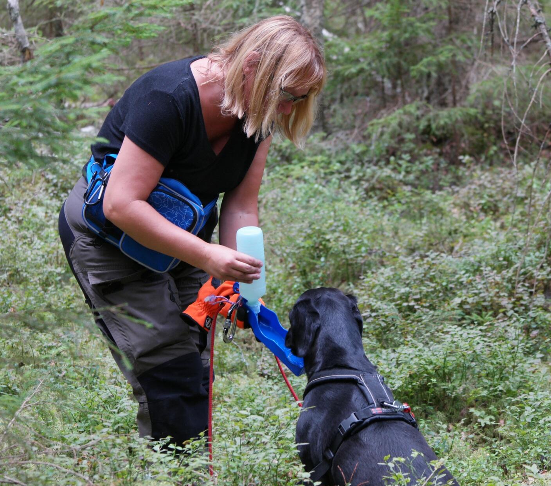 Labrador får vatten.