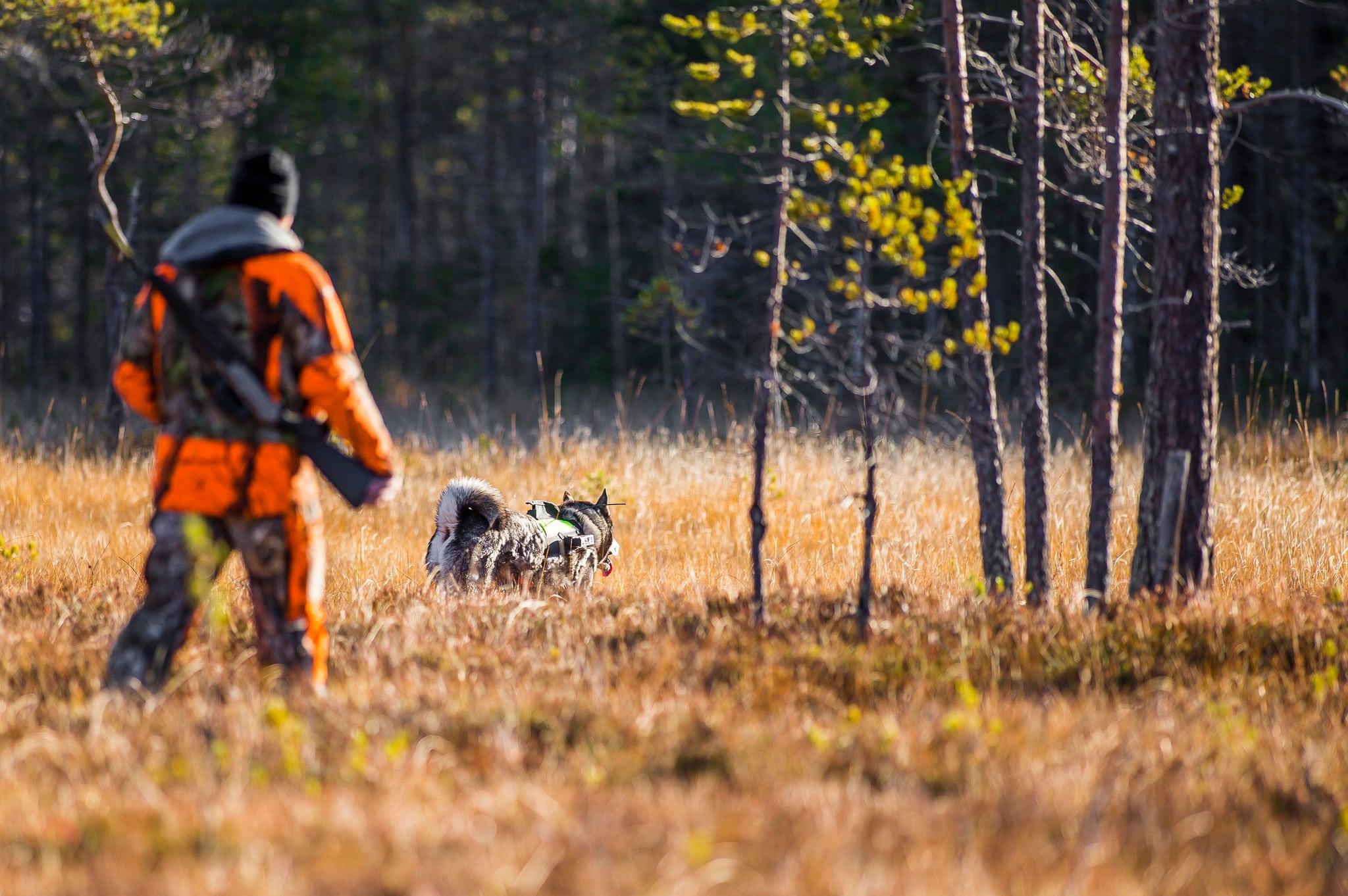 Här hittar du massor av lediga jaktmarker.