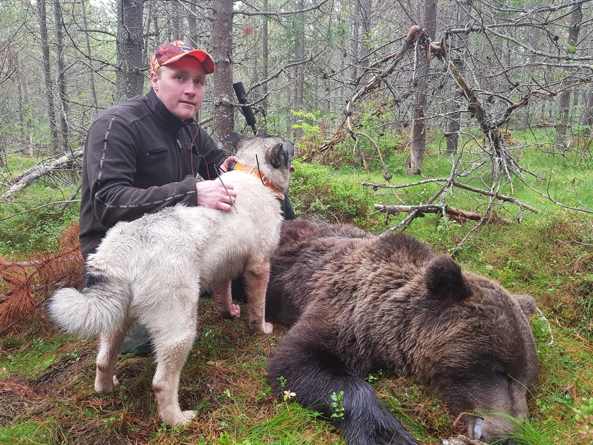 Den erfarne Ole Germund Nymoen med björnen på 115 kilo. Foto: Per Andersson