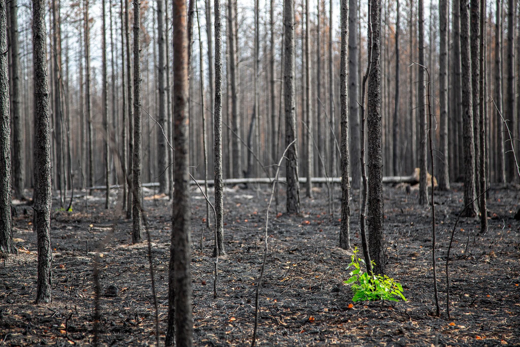 Branden i Enskogen ödelade enorma värden.