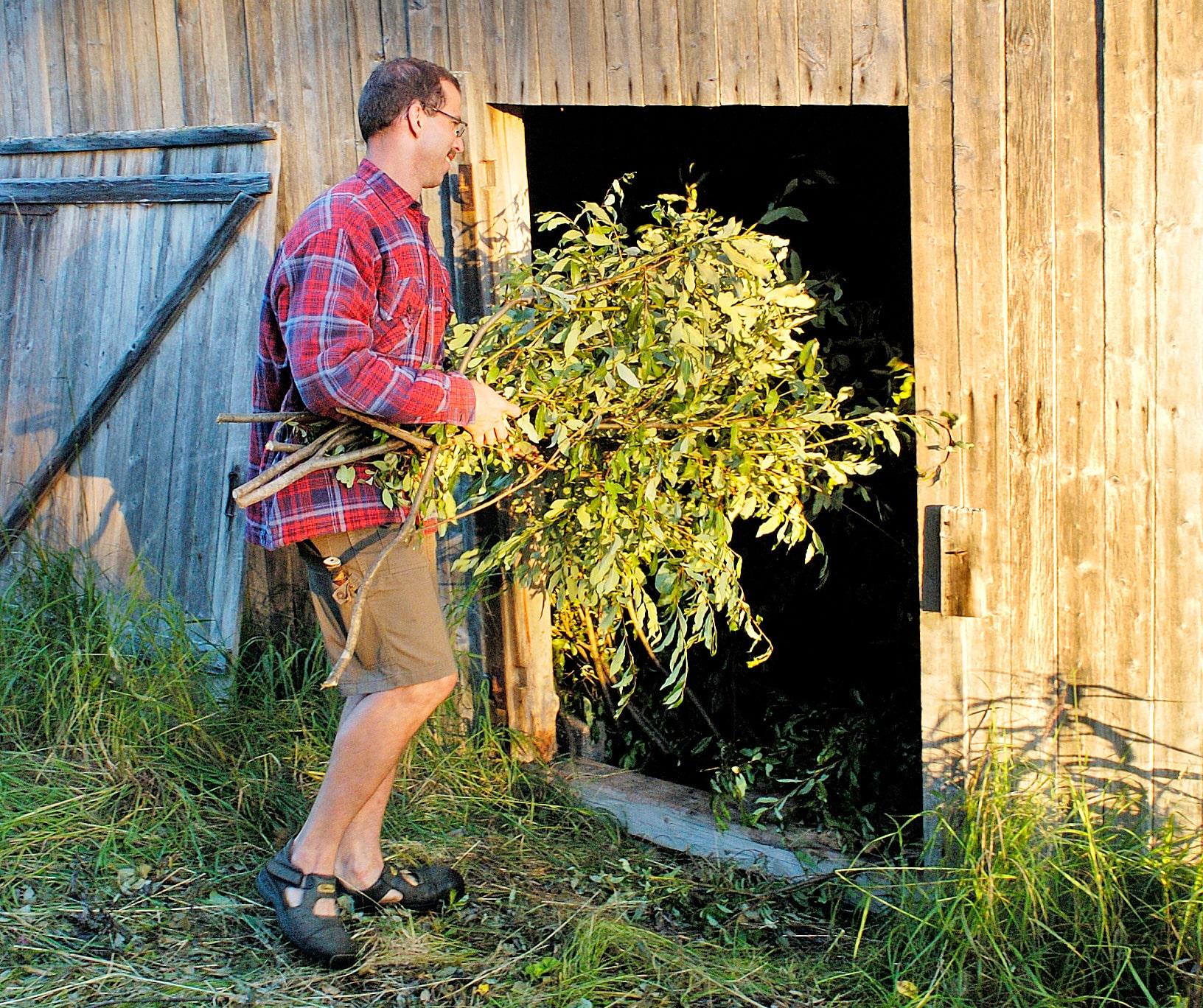 Att samla löv för torkning till rådjuren är ännu inte för sent. Sälg och rönn och asp är lämpliga trädslag.