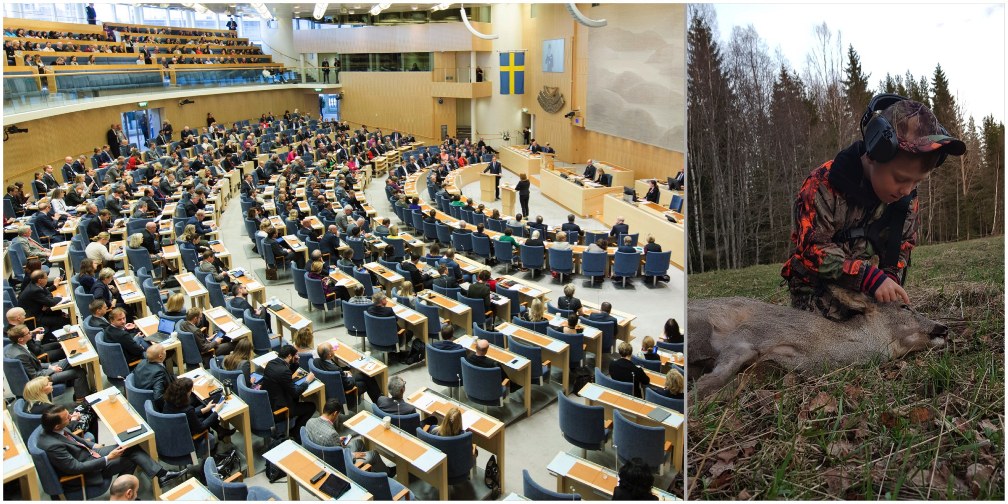 Jaktfrågorna är avgörande i valet till riksdagen. Det har 40 procent av de svarande uppgett. Foto: Melker Dahlstrand samt Olle Olsson