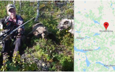Albin Brenje med björnen han fällde under uppsiktsjakt i Storåbränna. Foto: Privat