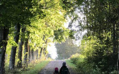 Barn på skogsväg