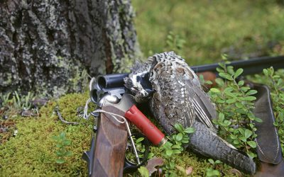 Järpe jagas med hagelgevär och fint hagel, exempelvis US6. Eller med .22 lr med kikarsikte och ammunition som inte har så hög utgångshastighet. Foto: Lars-Henrik Andersson