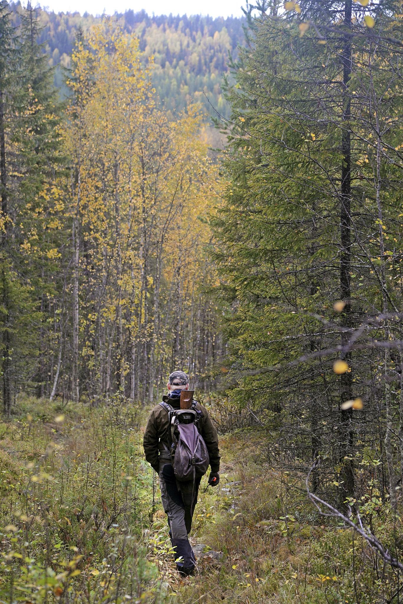 Du hittar järpen i den glesa granskogen, gärna med inslag av lövträd och bäckar eller åar. Bäst är jakten i slutet av september till mitten av oktober. I alla fall i norra Sverige.