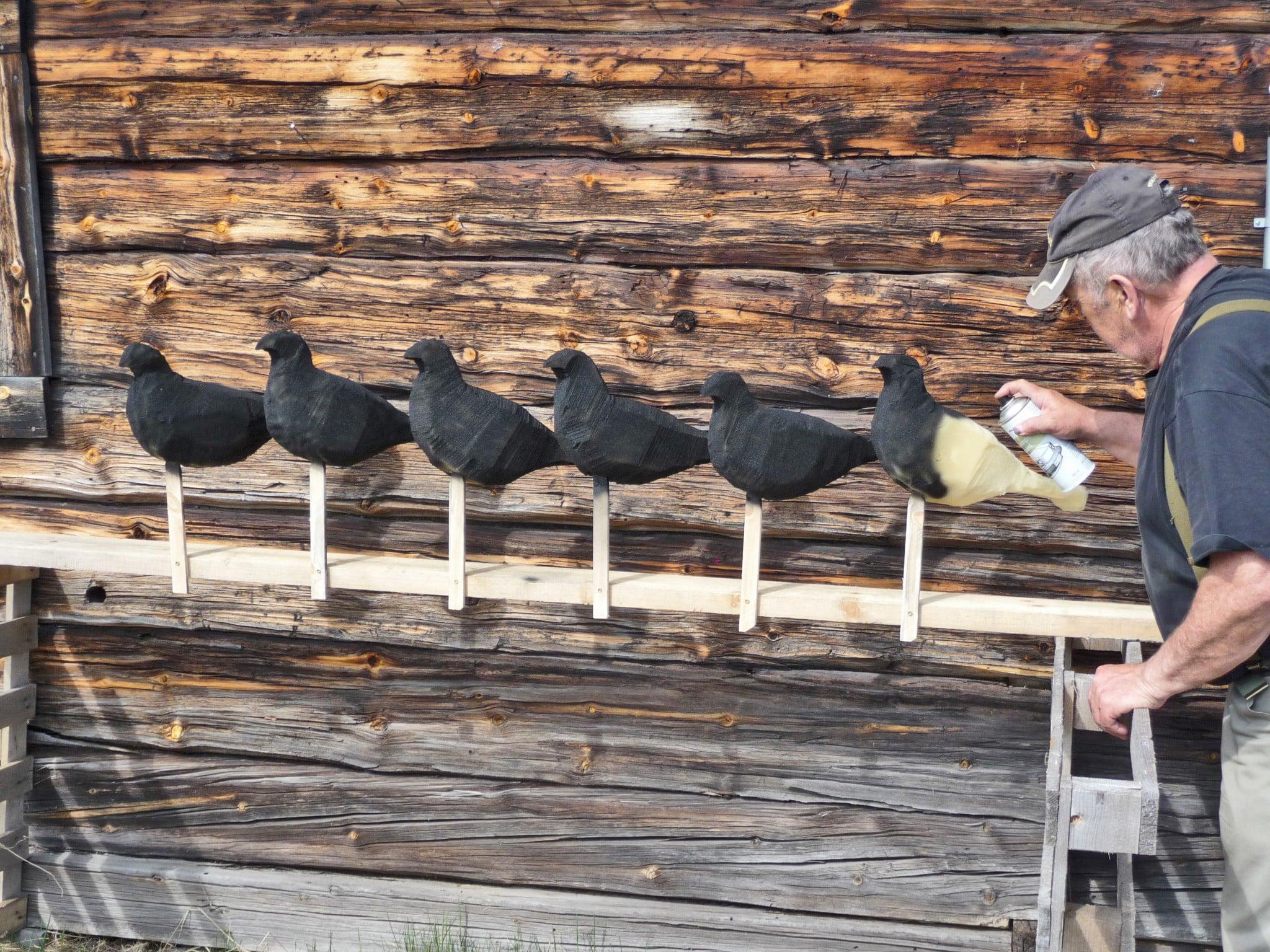 Bulvanerna borde egentligen sprayas med blå färg, men det är svårt att hitta lämplig nyans. Dessutom förefaller, som tidigare nämnts, den svarta färgen godtas av både orrar och duvhökar. Dock bör man följa rekommendationen på sprayburkarna och sörja för god luftväxling. Foto: Leif Lindqvist