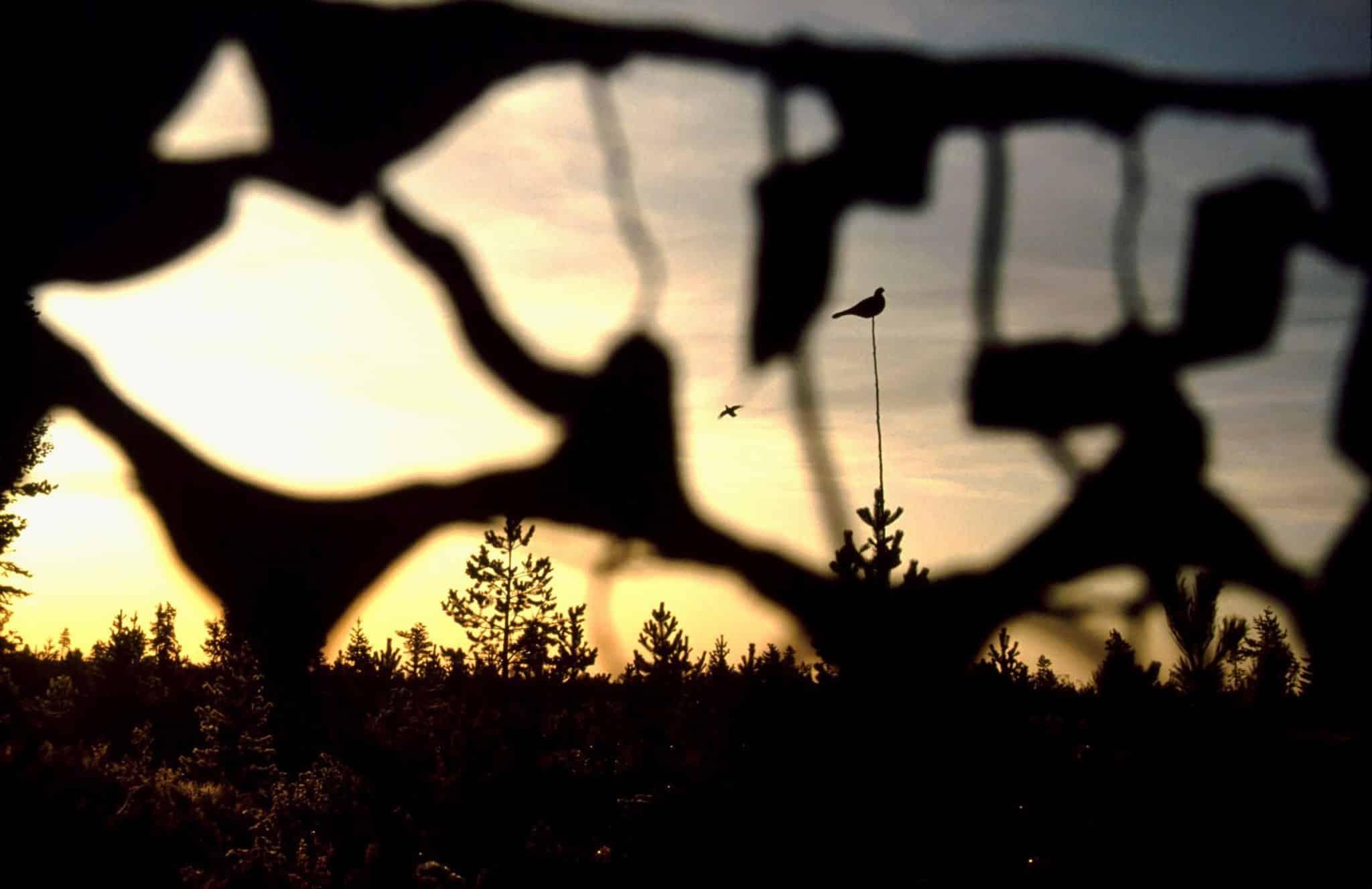 Foto: Leif Lindqvist
