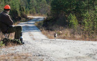 Det är inte lagligt att inom ett viltvårdsområde avlysa småviltjakt i väntan på älgjakt.