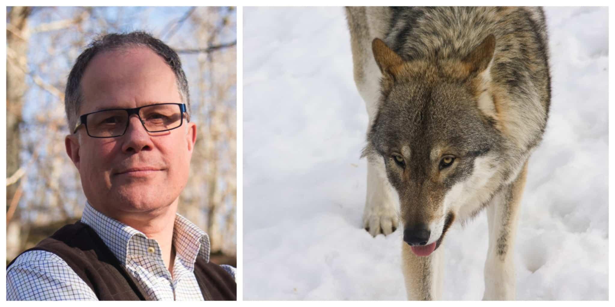 Vi kommer alltid stå upp för jakten, jägarna och viltet och vi kommer aldrig acceptera illegal verksamhet i viltförvaltningen, skriver Torbjörn Larsson, ordförande i Svenska Jägareförbundet.