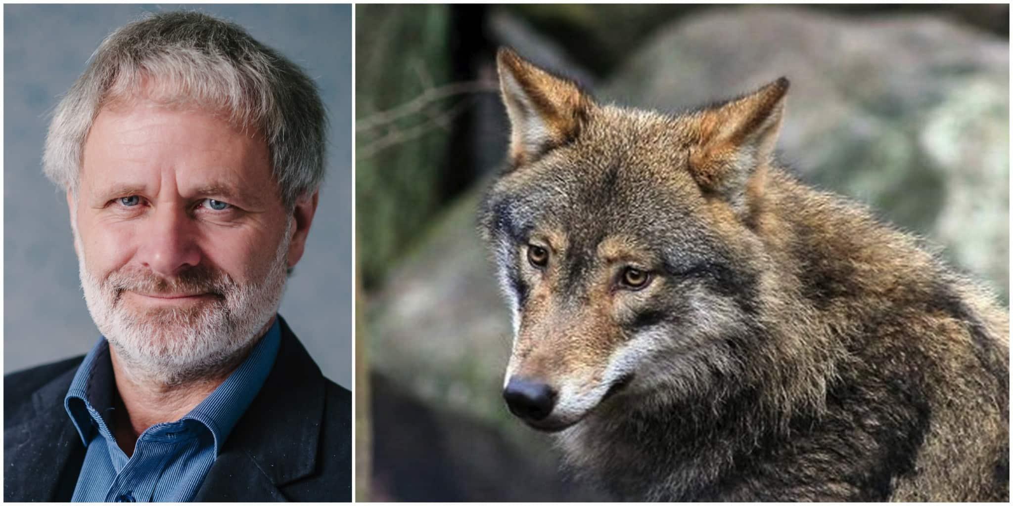 Politikerna måste ställa sig frågan varför berörda är missnöjda med rovdjurspolitiken, menar Mats Forslund vid WWF.