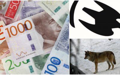 Naturvårdsverket fortsätter att ge stora ekonomiska bidrag till Naturskyddsföreningens arbete med att bevaka licensjakten på varg. Foto: Mostphotos & Lars-Henrik Andersson