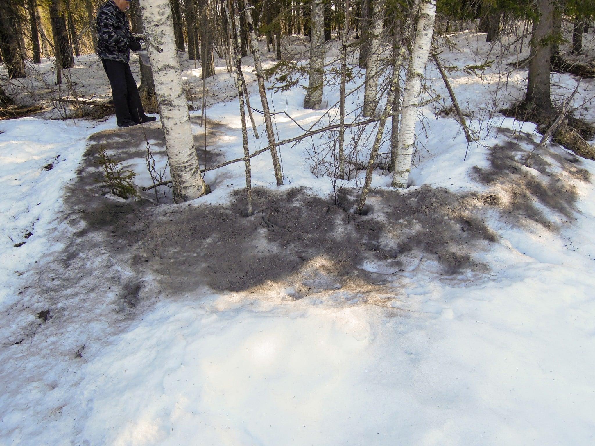 Askan sprids medan det ännu ligger djupt med snö. Arbetet underlättas om det blåser. Foto: Bernt Karlsson
